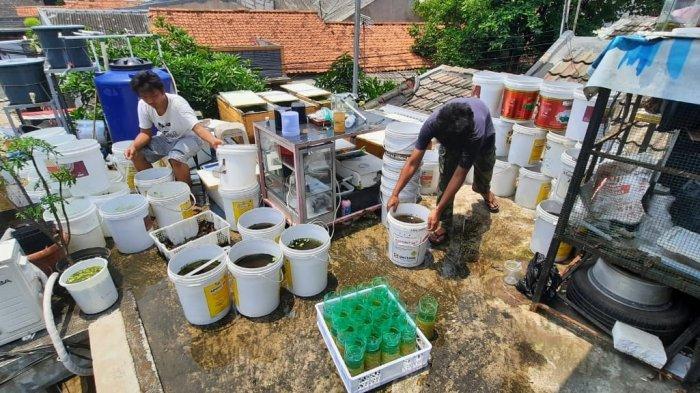 Modal Awal Hanya Rp 50 Ribu Pemuda Ini Kini Raup Puluhan Juta Dari Ternak Ikan Cupang Halaman 3 Tribunnews Com Mobile