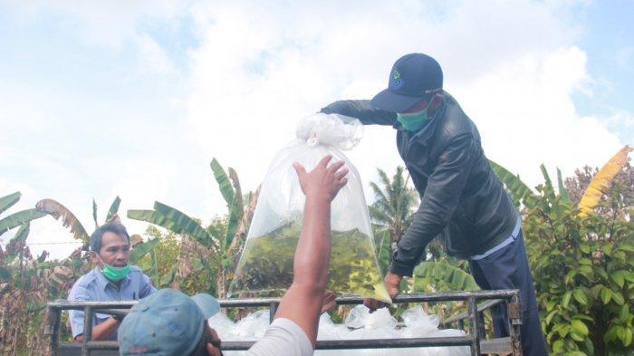 Genjot Produksi, KKP Kembali Salurkan 350 Ribu Benih Ikan Air Tawar untuk Pembudidaya di Kalimantan