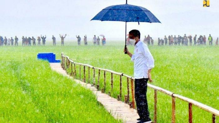 Bukit di Sekitar Food Estate Diberi Nama Jokowi, Bupati Sumba Tengah Sebut Itu Kesepakatan Warga