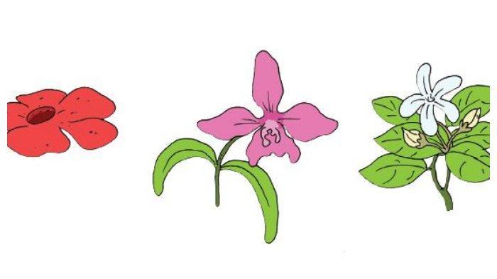 Bunga Nasional Indonesia di Buku Tematik Tema 1 Kelas 3 SD halaman 161.