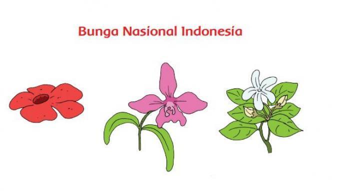 Kunci Jawaban Tema 1 Kelas 3 SD Halaman 162 163 165 166 Subtema 4 Tematik: Bunga Nasional Indonesia