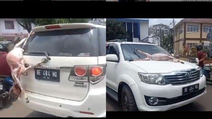 Bupati Lampung Utara Ditangkap KPK, Hotman Paris Unggah Video Warga yang Rayakan Bawa Hewan Dikuliti