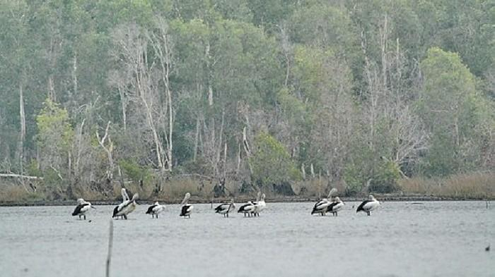 Burung-burung di Taman Nasional Wasur.