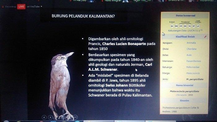 Burung Pelanduk Kalimantan Kembali Teridentifikasi Setelah 172 Tahun Hilang