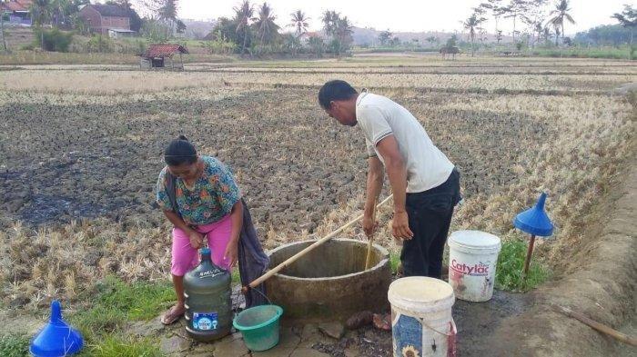 Masyarakat Desa Capar Kecamatan Jatinegara Kabupaten Tegal sedang mengambil air di tengah sawah, Rabu (6/11/2019)
