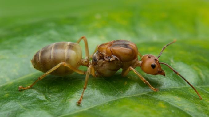 Cara Membasmi Semut dengan Mudah dan Alami, Ikuti Tips Berikut Ini!