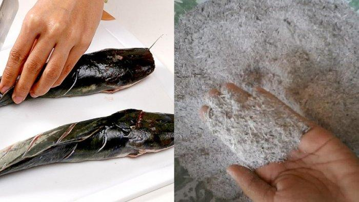 Trik Rahasia Membersihkan Lendir Pada Ikan Lele Gampang Banget Tribunnews Com Mobile