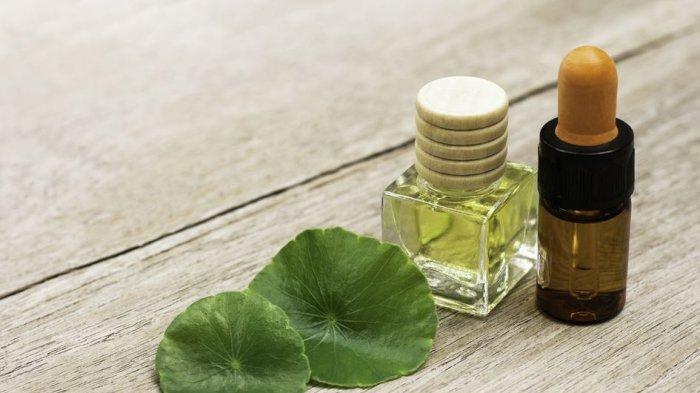 Mengenal Kembali Centella Asiatica yang Populer untuk Bahan Skincare