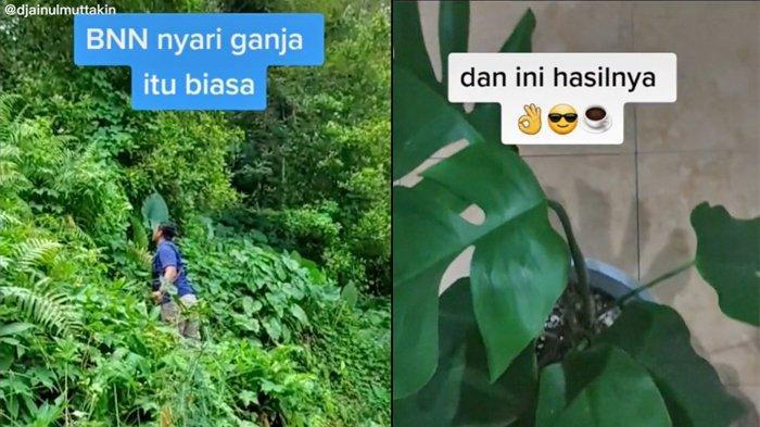 Cerita Anggota BNN Berburu Tanaman Hias di Hutan, Sempat Dicari Pimpinan setelah Videonya Viral