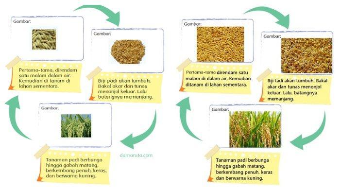 Contoh Gambar Diagram halaman 3 tema 3 kelas 6 SD.