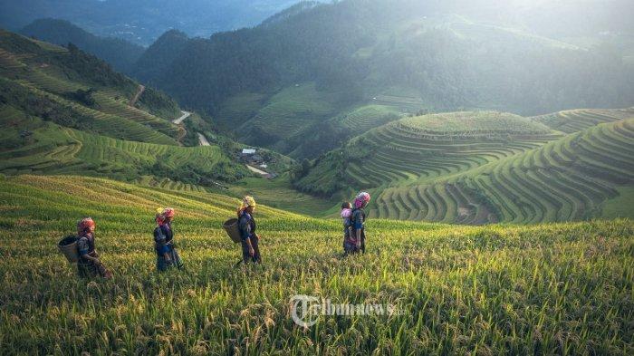 Crowde Beberkan 3 Hal Yang Harus Diketahui Konsumen Terkait Produk Pertanian