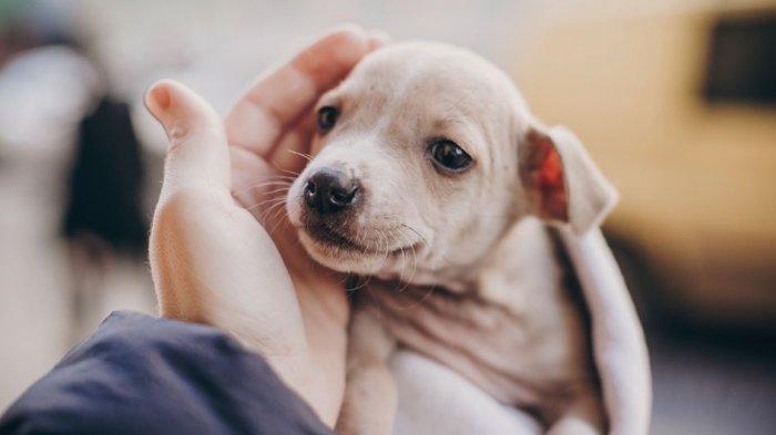Sebelum Memelihara, Ketahui Dulu 6 Penyakit pada Anak Anjing Ini