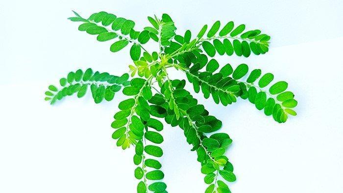 Varian Delta Menggila, Konsumsi 3 Herbal Ini untuk Tingkatkan Daya Tahan Tubuh!