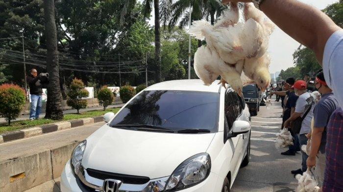 Harga Ayam Anjlok, Peternak Demo dan Bagikan Ayam Hidup di Depan Kementan