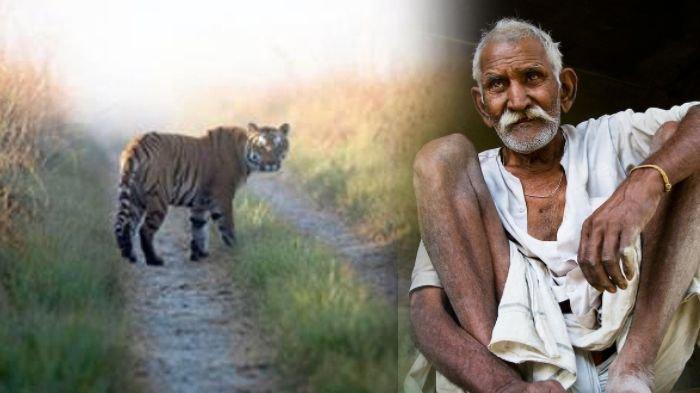 Wabah Covid-19 di Kebon Binatang, Cagar Alam Harimau India Ditutup untuk Wisatawan