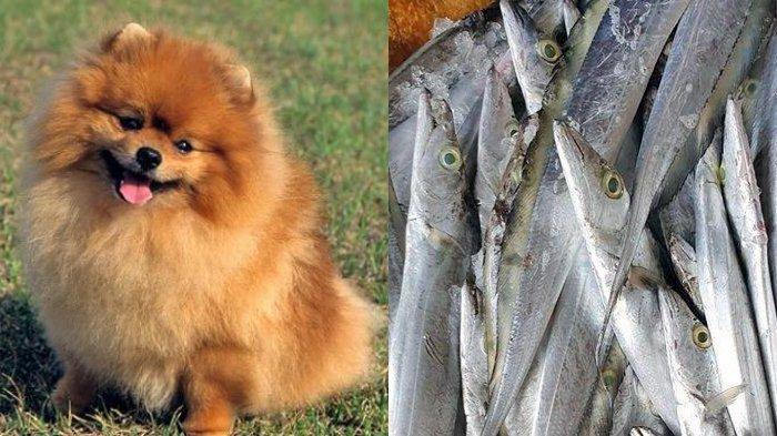 POPULER INTERNASIONAL: Seekor Anjing Positif Covid-19 | Ikan Beku Indonesia Dilarang Masuk ke China
