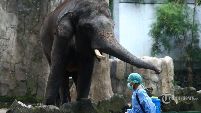 Petugas menyemprotkan cairan disinfektan di area Kebun Binatang Ragunan, Jakarta Selatan, Selasa (17/3/2020), Pascaditutup sementara, area Kebun Binatang Ragunan dilakukan penyemprotan disinfektan guna mencegah penyebaran virus corona atau Covid-19. Tribunnews/Irwan Rismawan