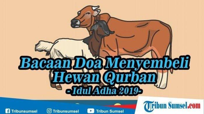 Doa Menyembelih Hewan Kurban Idul Adha 2019 dan Artinya, Ini Urutannya Menurut Ahli Agama