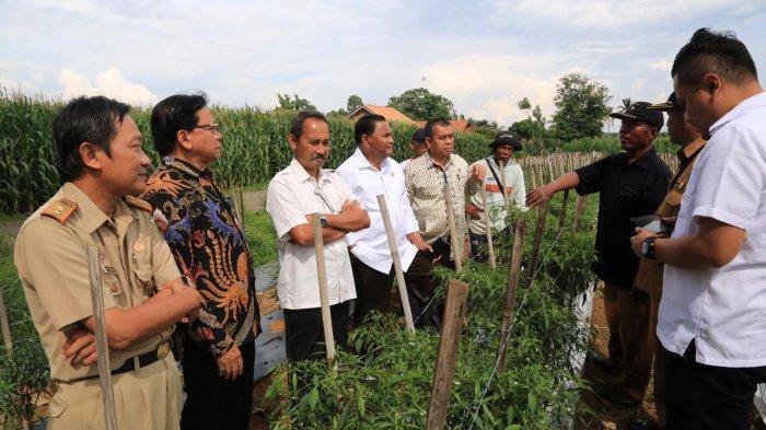 Komite II DPD RI Dorong Lampung Kembangkan Pertanian Unggulan
