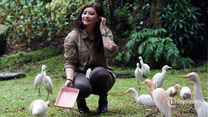 Duta Satwa Indonesia, Qory Sandioriva mengunjungi Taman Burung di Taman Mini Indonesia Indah (TMII), Jakarta Timur, Sabtu (19/6/2021). Sebagai Duta Satwa, Qory Sandioriva memperkenalkan satwa endemik atau satwa khas Indonesia ke tingkat dunia, turut melestarikan satwa Indonesia dan satwa dunia yang diambang kepunahan baik secara Exsitu (di luar habitat aslinya) maupun Insitu (di dalam habitat aslinya) dan membantu Lembaga Konservasi (pelestarian satwa secara Exsitu) sebagai pusat edukasi satwa bagi masyarakat luas khususnya generasi penerus bangsa. Tribunnews/Herudin