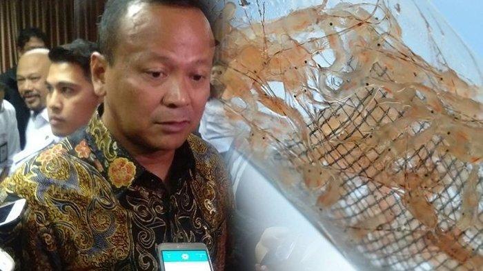 Kebijakan Jadi Kontroversi, Edhy Prabowo: Anda Pasti Tertawa tentang Lobster, Saya Tidak akan Mundur