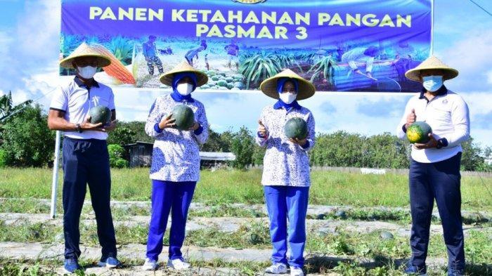 Komandan Pasmar 3 Panen Raya Buah Semangka Dilahan Ketahanan Pangan Wilayah Binaan Pasmar 3