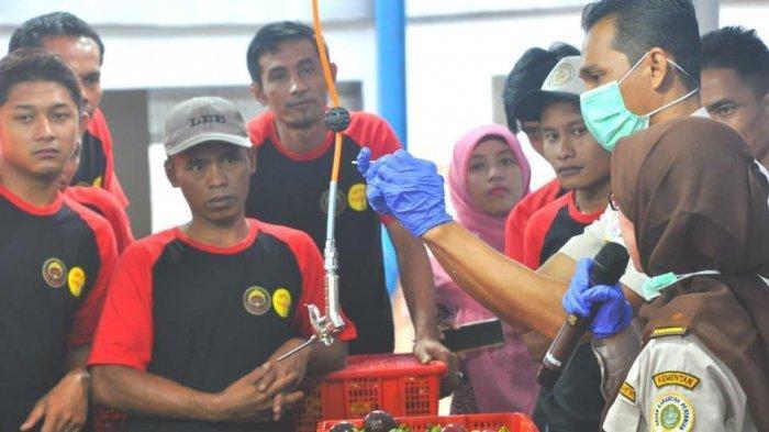 Di Masa Pandemi, Ekspor Manggis Indonesia ke Cina Naik Dua Kali Lipat Lebih