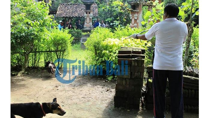 8 Orang Digigit Anjing Liar di Cipongkor Bandung Barat, Dinkes Menduga Anjing Terpapar Rabies