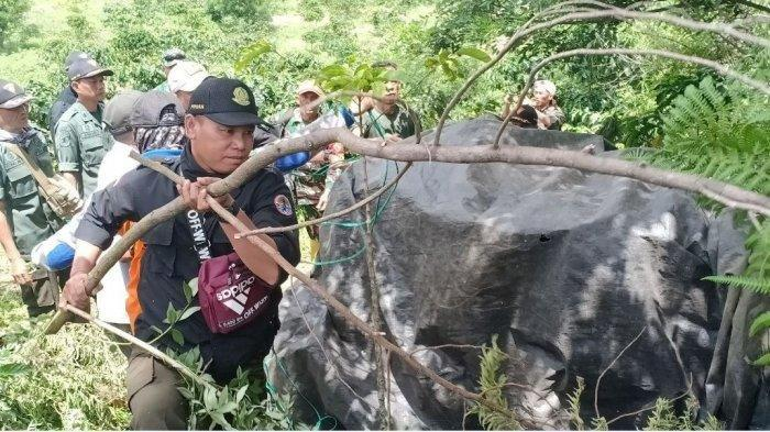 Evakuasi harimau yang masuk perangkap di Semendo, Muaraenim, Selasa (21/1/2020). (Istimewa)