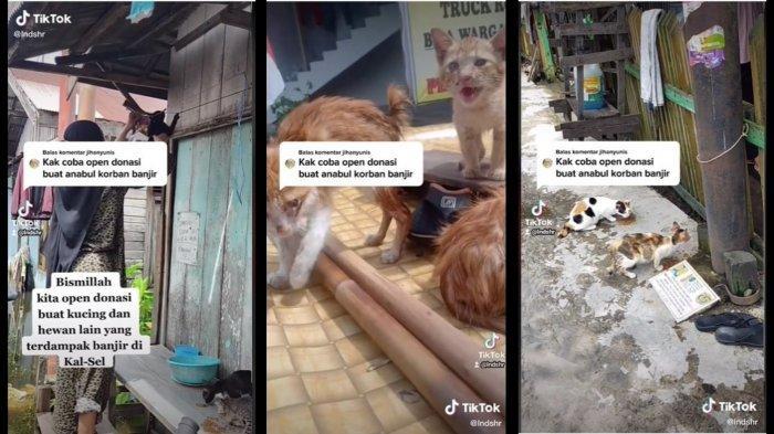 Kucing Terlantar Akibat Banjir Kalsel Kini Dapat Bantuan Donasi Setelah Video Evakuasi Viral