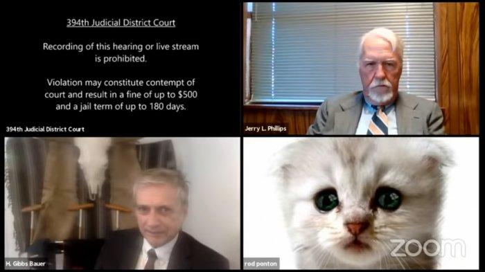 Viral Pengacara Berubah jadi Kucing karena Tak Sengaja Nyalakan Filter Zoom saat Debat dengan Hakim