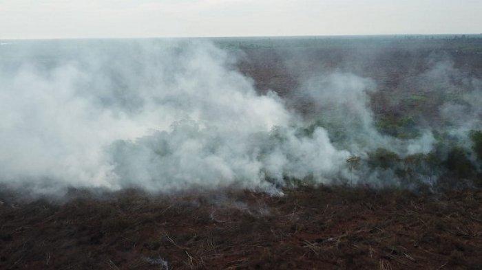 Foto kebakaran hutan diambil dari udara. Adapun kasus terbesar dalam karhutla tersebut adalah meluasnya kebakaran lahan gambut yang berada di 12 kota/kabupaten di Provinsi Riau dengan wilayah terluas adalah di Bengkalis, dengan total area terbakar hingga 1.277,8 hektar