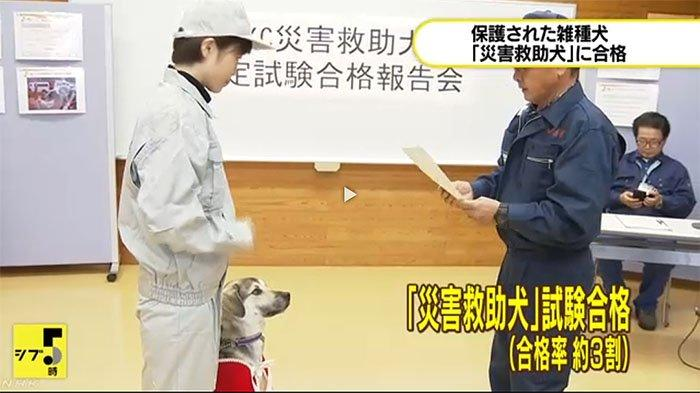 Anjing jantan campuran anjing liar, Fuga, Kamis (26/12/2019) dapat sertifikat lulus dari Pusat Manajemen Perlindungan Hewan Perfektur  Tokushima (Shikoku) di Jepang Barat.