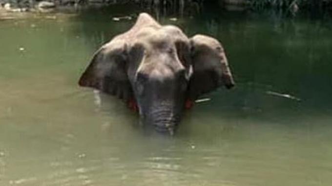 Gajah yang ditemukan mati berdiri di sungai