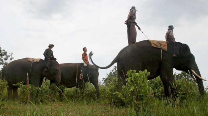 Tak Hanya Bromo dan Komodo, 5 Taman Nasional Ini Juga Wajib Anda Kunjungi