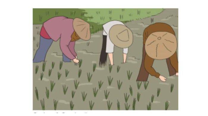 Gambar 3.14 Petani padi