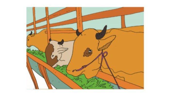 Gambar 3.15 Peternakan sapi