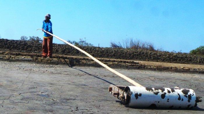 Petani garam mengolah ladang garam di Desa Sawojajar, Kecamatan Wanasari, Kabupaten Brebes, Jawa Tengah, Selasa (25/7/2017). TRIBUN JATENG/MAMDUKH ADI PRIYANTO