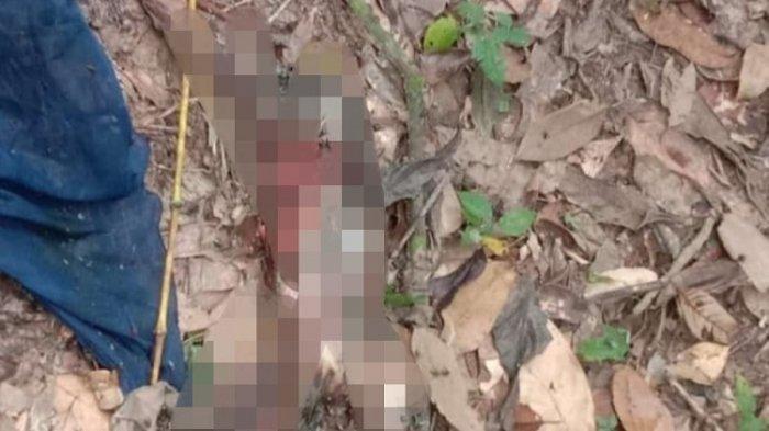 Geger Penemuan Janin Membusuk di Hutan Kampus UHO, Ditutupi Jilbab Biru, Ini Kata Polisi