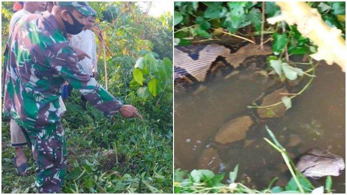 Babinsa bersama masyarakat saat hendak melakukan penangkapan terhadap seekor ular piton berukuran besar di kawasan Gampong Baro, Kecamatan Setia Bakti, Aceh Jaya, Kamis (15/4/2021). (SERAMBINEWS.COM/ RISKI BINTANG)