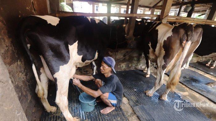 DPR Heran Kementerian Pertanian Tetap Jalankan Program 1.000 Desa Sapi, Padahal Tak Direstui