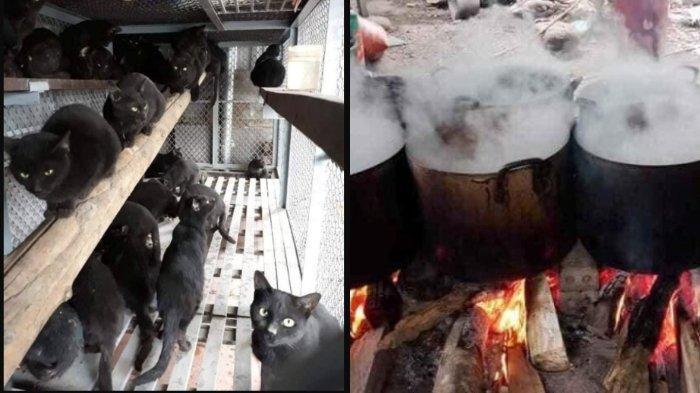 Kucing Hitam di Vietnam Diolah Menjadi Obat Corona