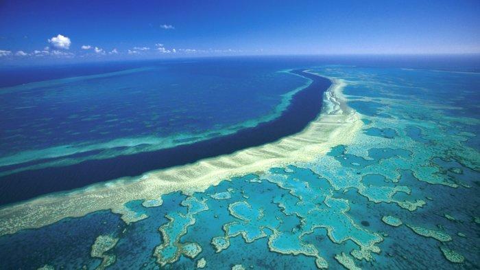Penelitian Terbaru: Great Barrier Reef Australia Kehilangan Lebih dari Separuh Karangnya sejak 1995