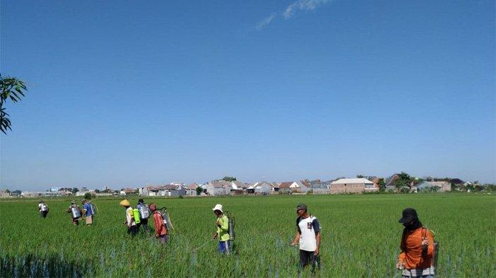 Berbeda dengan Petani 'Kolonial', Milenial Pakai IoT untuk Bisnis Pertanian