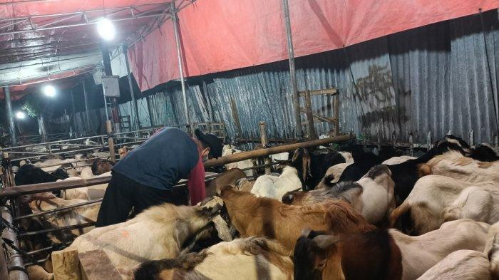 Abdul Pedagang Hewan Kurban di Johar Baru, Mengeluh Omzet Penjualan 2021 Turun 50 Persen