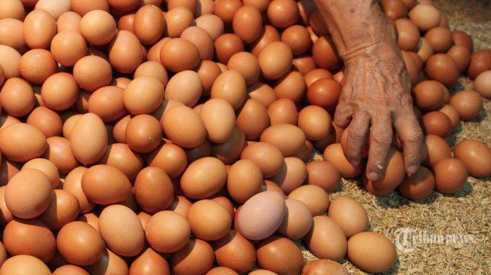 Dihajar PPKM, Harga Telur Ayam di Daerah Anjlok, Peternak Minta Dimasukkan ke Paket Bansos