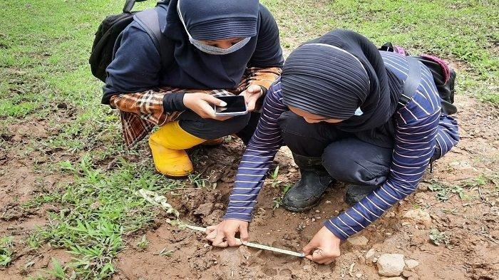 Harimau Terkam 3 Kerbau Milik Warga Kabupaten Agam Sumbar