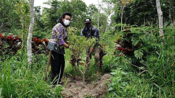 Reses, GKR Hemas Terima Keluhan Kawanan Kera Turun dari Merapi