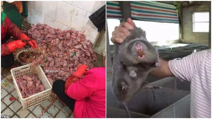 Hewan liar yang dijual belikan di pasar hewan wuhan, China - Wuhan Secara Resmi Larang Konsumi Hewan Liar