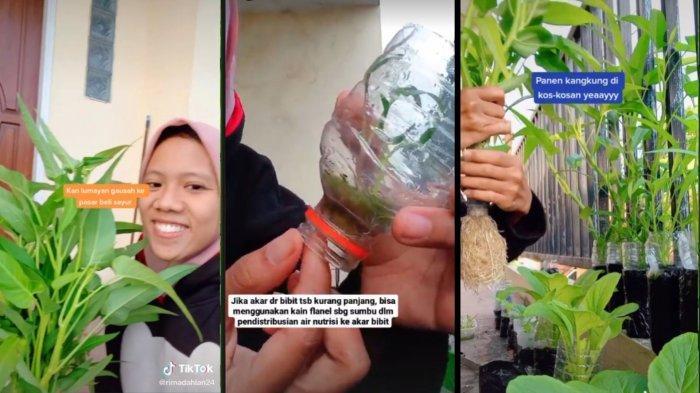 Viral Video Gadis Ajak Anak Kos Bercocok Tanam untuk Irit Uang Makan: Sumpah Gampang Banget